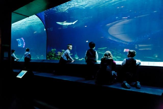 vancouver-aquarium-wedding-9