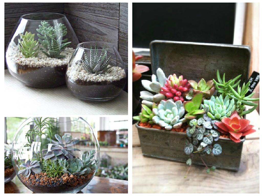 Como plantar cactos abilolando for Como plantar cactus