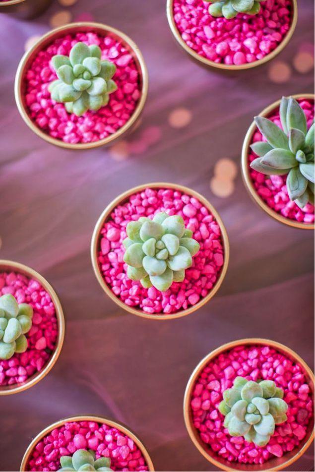 plantar-cactos-suculentas-5