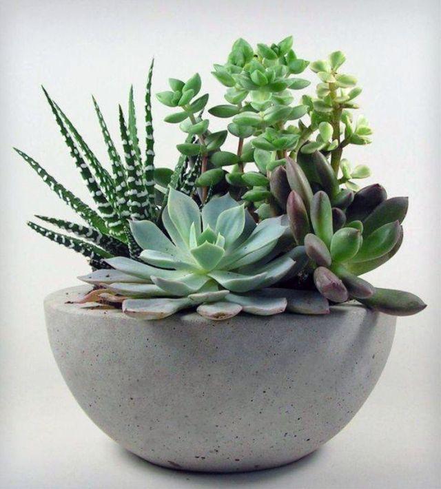plantar-cactos-suculentas-6